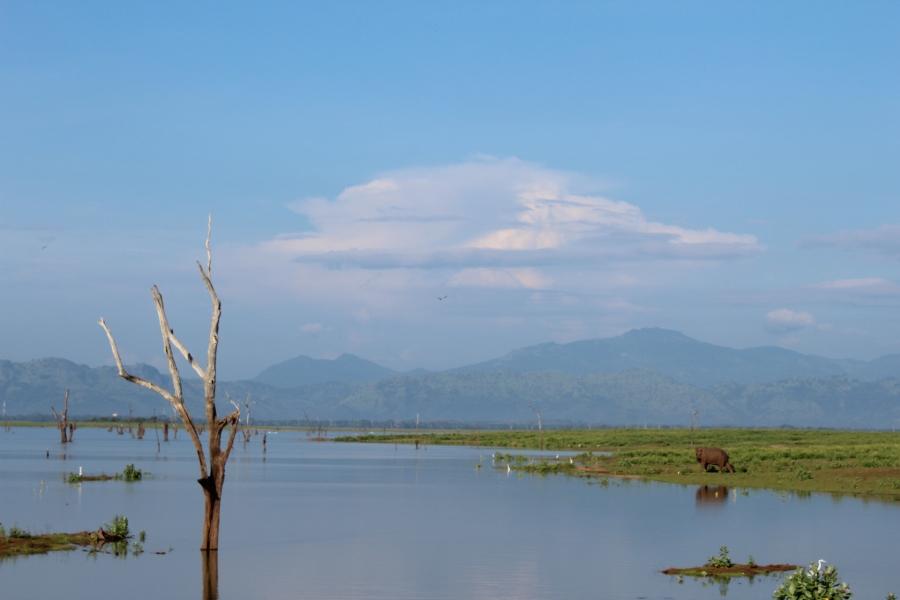 SriLankaBlog-7930
