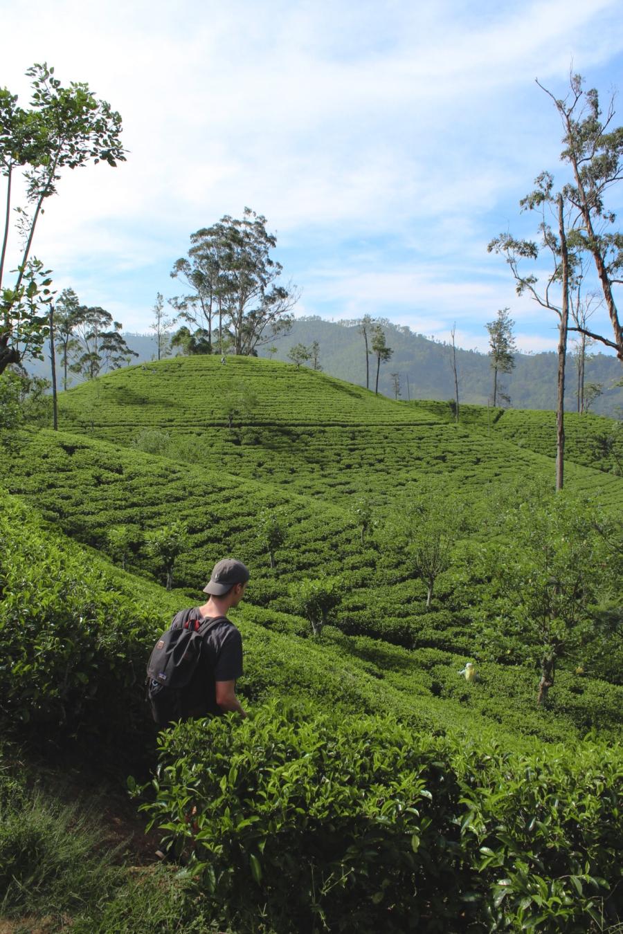 SriLankaBlog-8540