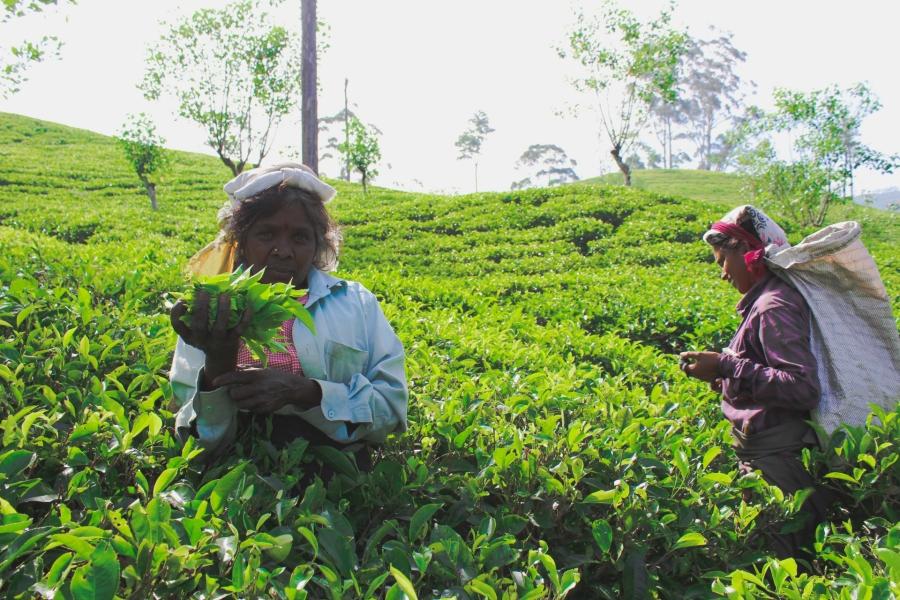 SriLankaBlog-8674