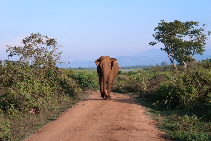 sriblog elephant-7906