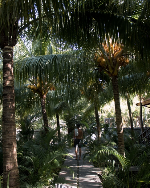 GiliCocoTrees2BLOG-6192
