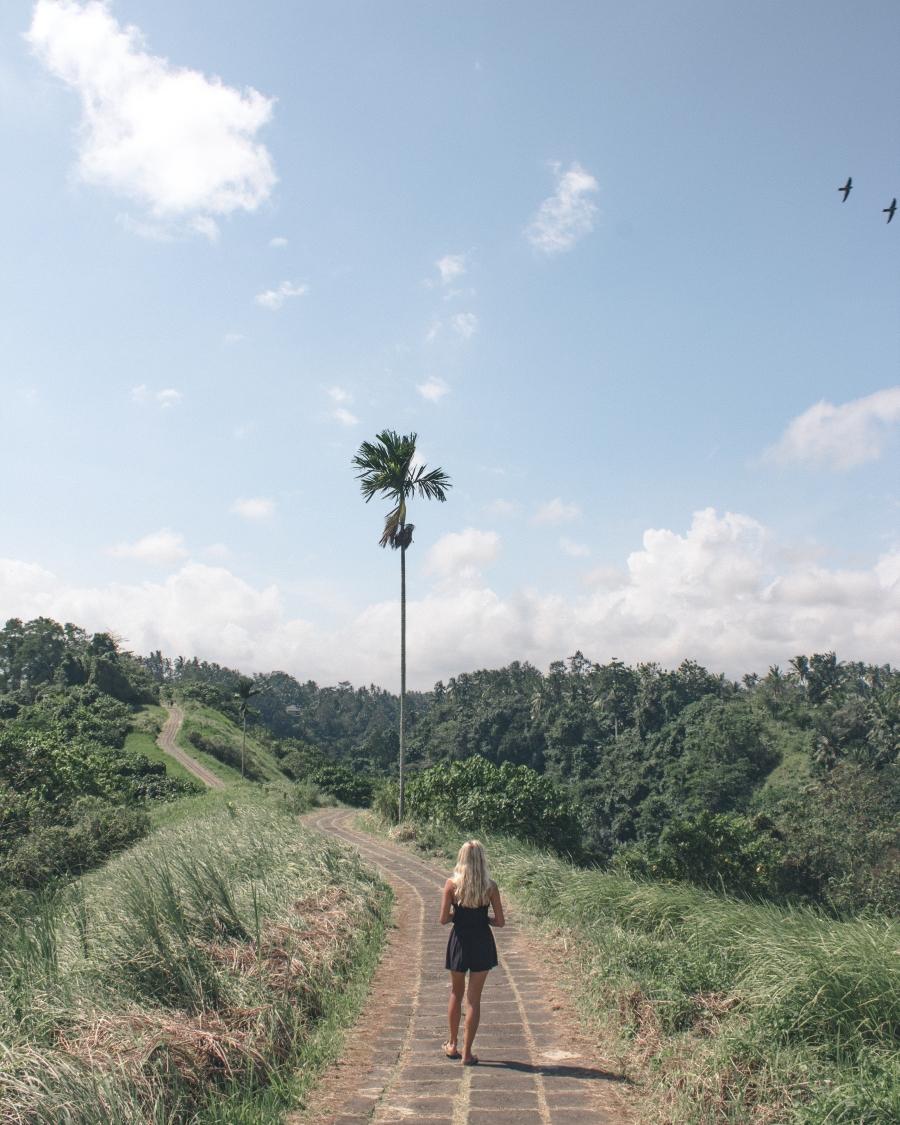 baliblog monkecanopywalk-3062